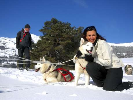 Sled dog tandem ride
