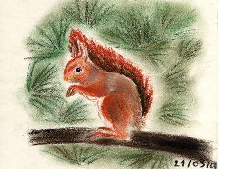Sortie Famille : La forêt de Babet l'écureuil