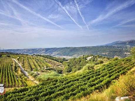 Tour des Vignobles de Bellet à Vélo
