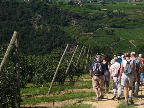 Fascinant Week-end - Randonnée découverte des vignobles