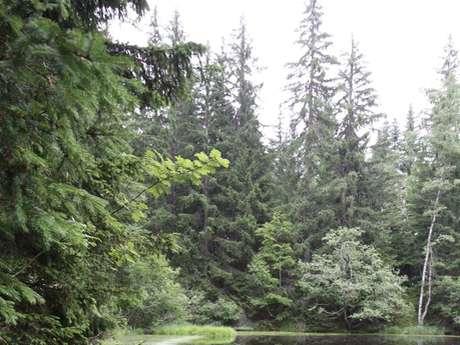 Espace Naturel Sensible de la forêt du Bout et Combe Grasse