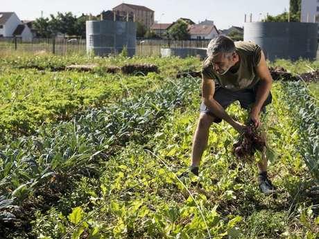 Cours d'initiation à la permaculture à Zone Sensible