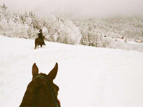 Balade à cheval dans la neige : faites le plein d'émotions enneigées