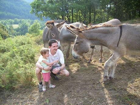 Les ânes du Verdon - location d'ânes sellés