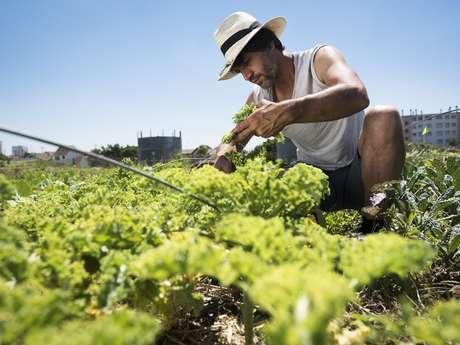 Visites en permaculture de Zone Sensible