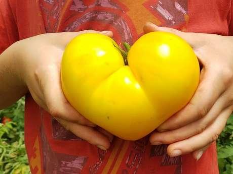 """Ma Saison Légumes """"Gozzerino"""" Agriculture Biologique"""