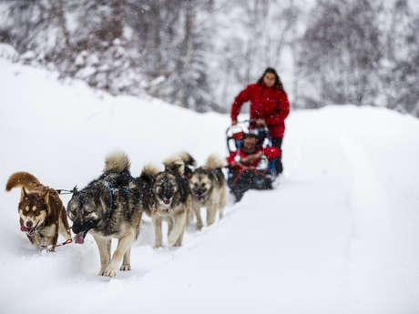 Sled Dogs and snowshoes with dog - Kuma & Co