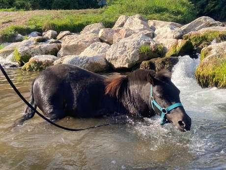 La petite cavale d'Erika - stage poney journée