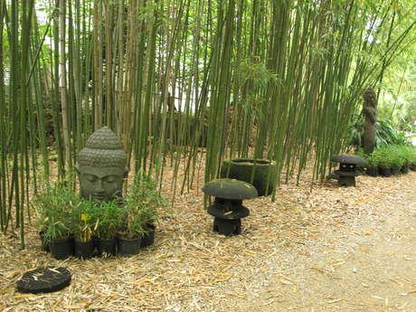 Bambous du Mandarin
