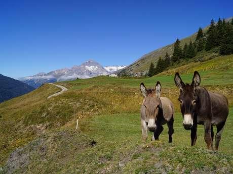 Location d'ânes pour une balade en famille