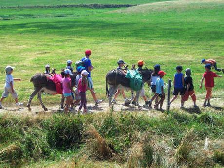 Bougez dans les Monts du Pilat - Balade nature avec des ânes (à partir de 3 ans)