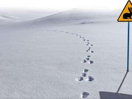 Accompagnez un Garde-Moniteur à la recherche des traces de la faune en hiver