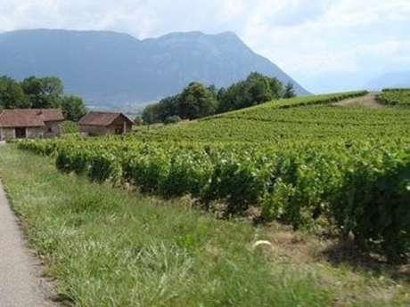 Itinéraire VTT Bellecombette à la rencontre des vignobles