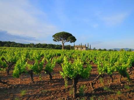 Vestiges romains et vins de Provence
