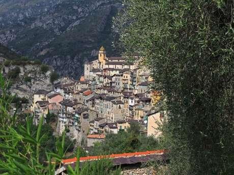 Huile d'olive, pâte d'olives, safran