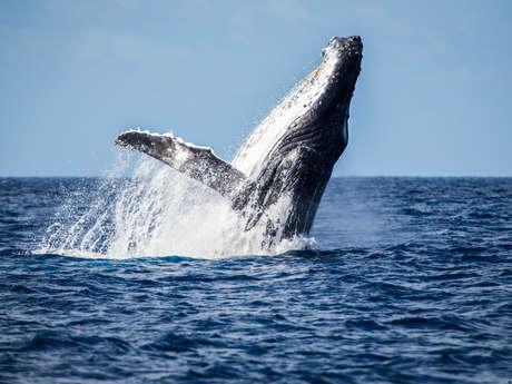 Sortie observation des baleines - Nautica