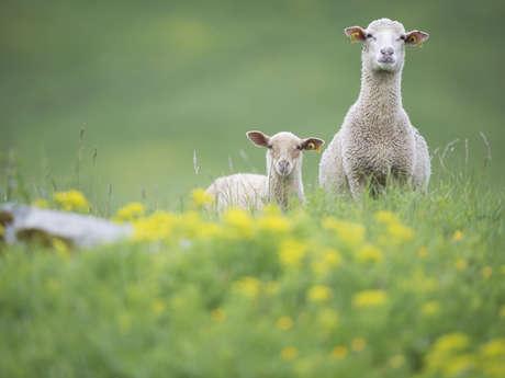 """Fête du pastoralisme et histoire de Pravouta dans le cadre des """"Alpages à partager""""."""