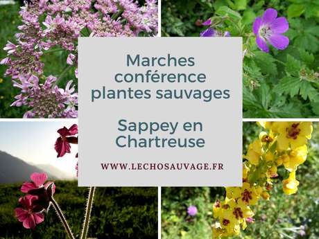 Sortie  automnale plantes sauvages  au Sappey-en-Chartreuse
