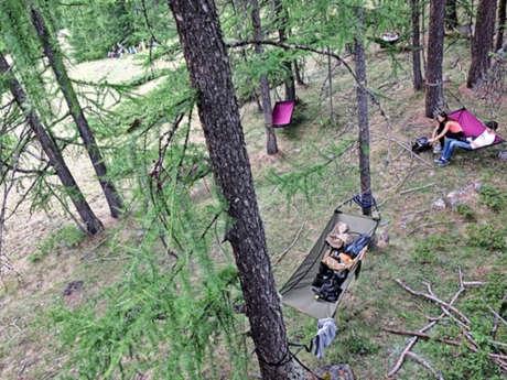 Bain de forêt et grimpe d'arbre !