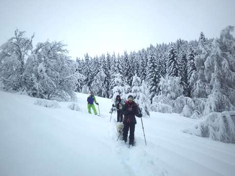 Guided snowshoeing hikes