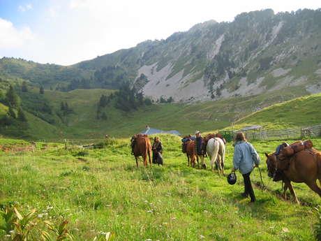 Séjour découverte de l'équitation