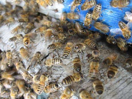 """Atelier """"L'univers fascinant des abeilles"""""""