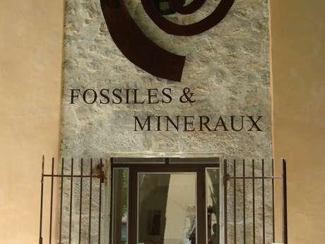 Musée des fossiles et minéraux