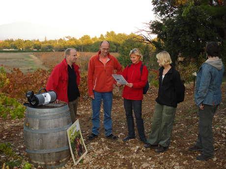 Audio-tour cave et vigne au Domaine de Marotte