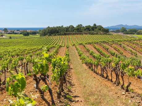 Guided tour: From the vine to the tasting at the monastic castle of Les Bormettes