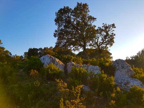 Randonnée GR 51, Sentier de grande randonnée des Balcons de la Méditerranée