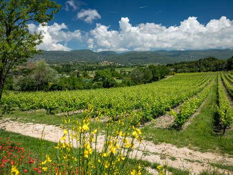 Pique-nique dans les vignes au Château Saint Pons