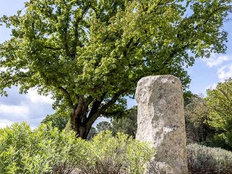 Die Menhire in Grimaud