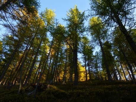 Bain de forêt de printemps
