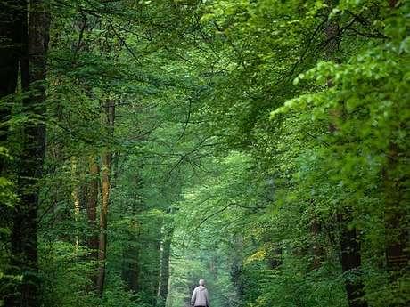 Marche nordique au parc de l'Île-Saint-Denis