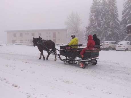 Tours de traineau à cheval