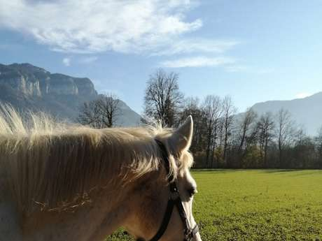 Balade à poneys