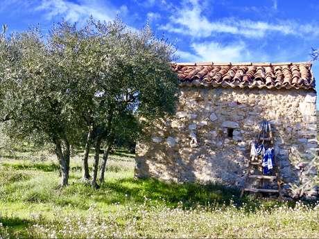 L'olive enchantée du Verdon