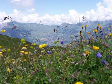 Randonnée thématique - Bella botanica à Bruson