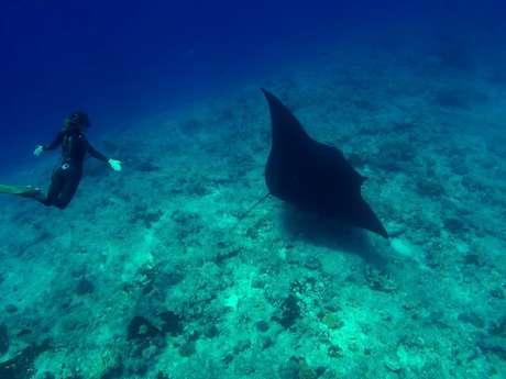 Sortie exploration en apnée - Blue Caledonia Freediving