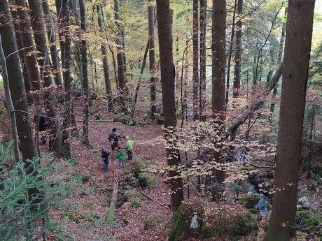 De la forêt à l'atelier