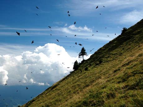 La coupe Icare et les oiseaux du Col du Coq