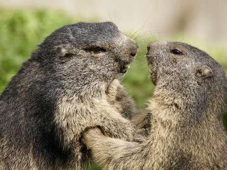 "Diaporama ""Les marmottes"""