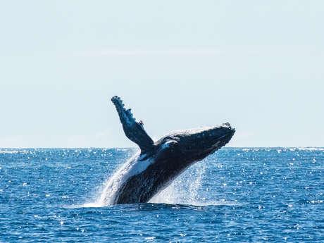 Sortie observation des baleines - Aventure Marine