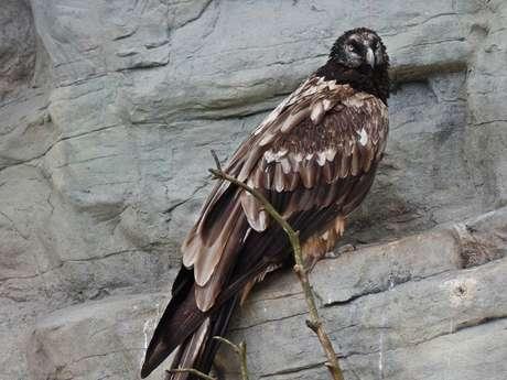 """Semaine à thème:""""l'environnement et la faune spécifique au Parc du Queyras"""""""