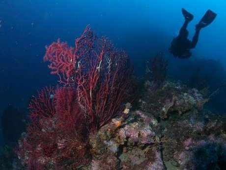 Randonnée aquatique - La Cigale plongée