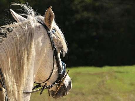 Promenade à cheval du Haras de l'Espinette - 1 heure