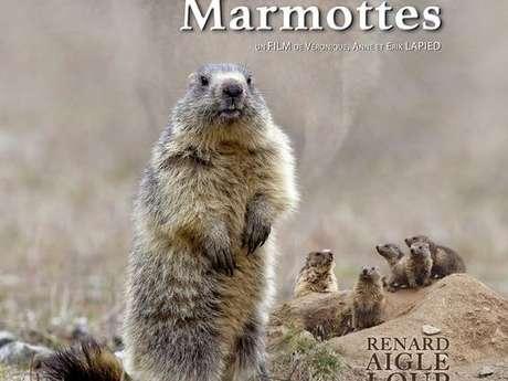 """Projection en plein air du film """"Le clan des marmottes"""""""