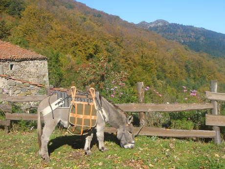 Vert-ânes