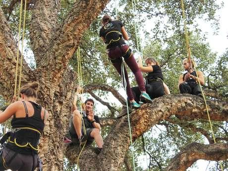 """Activité familles """"Grimpez dans les arbres"""""""