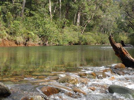 GRNC1 Étape n°4C : du refuge de Ouénarou au refuge des Tristaniopsis (par la vallée de la rivière Bleue)